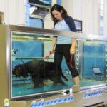 L'Idroterapia –  Modalità Underwater Treadmill